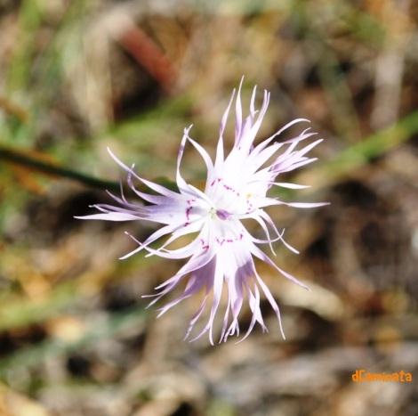17.flor